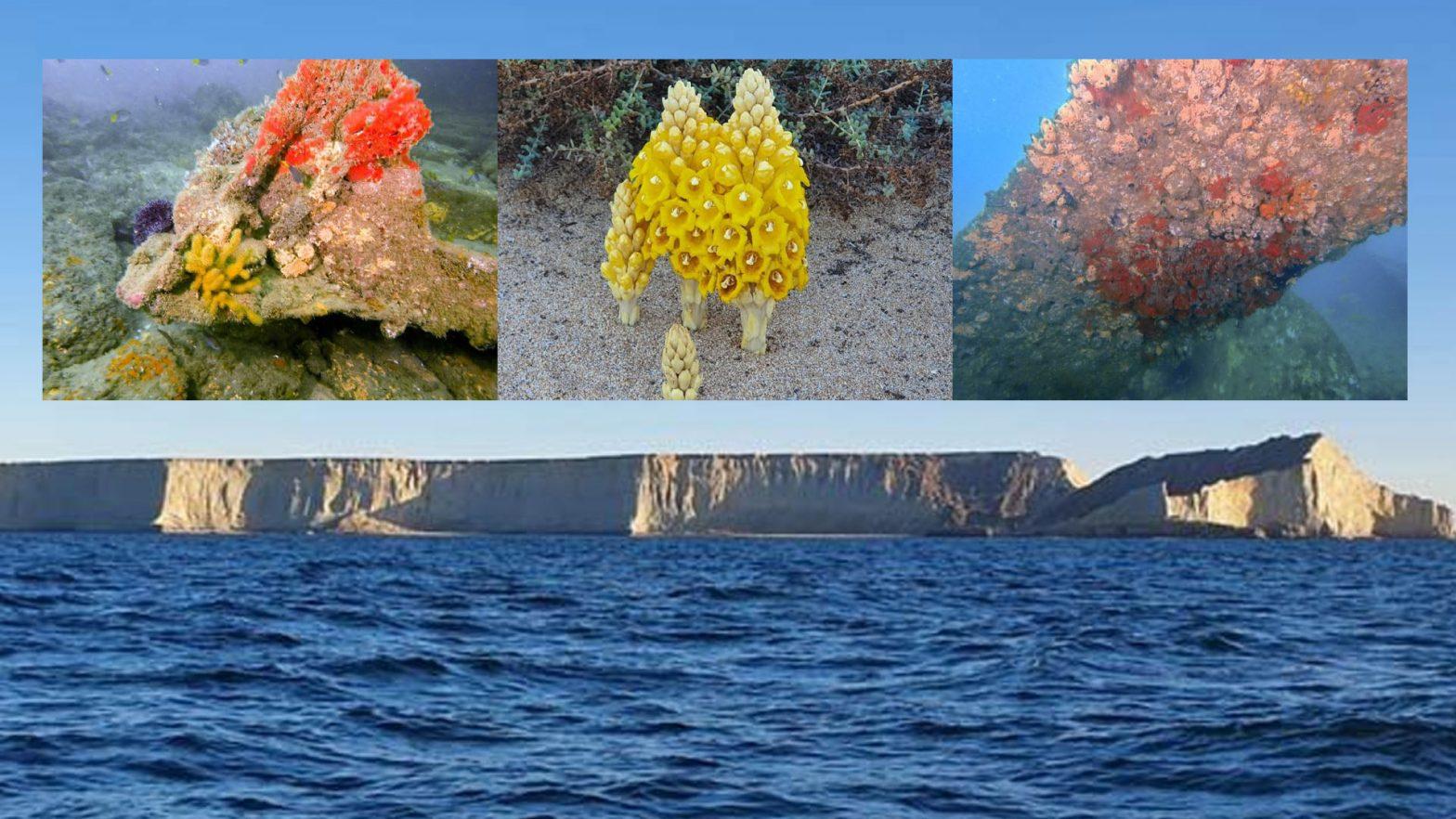 جزیرہ استولا
