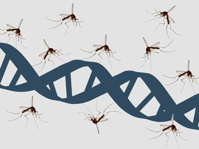 dnamosquito